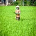 2018-07-19 1355 Vietnam